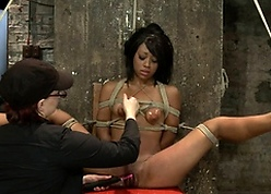 Tight-fisted headed black caned mainly hogtie